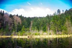 Lustro natura Fotografia Stock