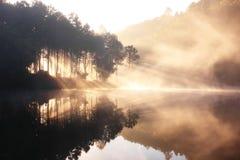 lustrzana natura Fotografia Stock