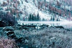 Lustrzana powierzchnia halny jezioro Obrazy Stock