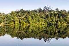 Lustrzany odbicie flory i drzewa na spokojnej wodzie Zdjęcia Stock