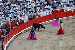 Luta de Bull Barcelona Imagem de Stock
