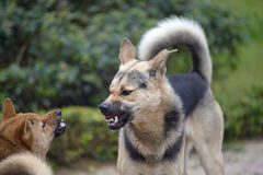 Luta de cão fotografia de stock royalty free