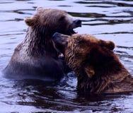 Luta de dois ursos Imagens de Stock