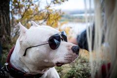 Luta do cão fotografia de stock