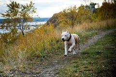 Luta do cão foto de stock royalty free