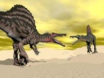 Luta do dinossauro de Spinosaurus - 3D rendem Fotografia de Stock Royalty Free