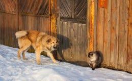 Luta do gato e do cão Fotografia de Stock