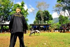 Luta dos carneiros de Garut Foto de Stock