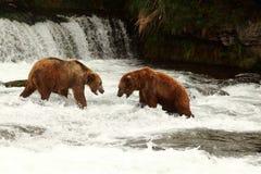 Luta dos ursos Imagens de Stock