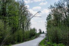 Luta trädet ovanför vägen fotografering för bildbyråer