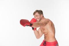 Lutador do pugilista em luvas de encaixotamento vermelhas Fotografia de Stock Royalty Free
