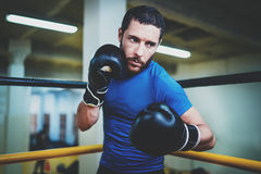 Lutador novo do homem do pugilista em luvas de encaixotamento Homem do encaixotamento pronto para lutar Encaixotamento, exercício Imagens de Stock