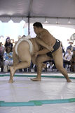 Lutadores 18 de Sumo fotos de stock royalty free