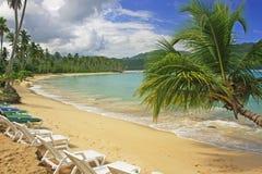 Lutande palmträd på den Rincon stranden, Samana halvö royaltyfria foton