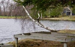 Lutande träd på en sjö Fotografering för Bildbyråer