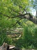 lutande tree Arkivbild
