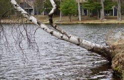 lutande tree Fotografering för Bildbyråer