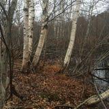Lutande Trees Arkivfoto