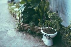 Lutandeförskjutningsskytte av toaletten med planterade blommor i den royaltyfria foton