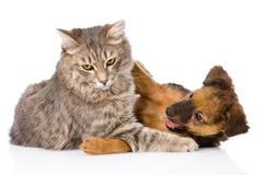Lutas do gato e de cão Isolado no fundo branco Fotografia de Stock Royalty Free