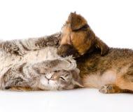 Lutas do gato e de cão No fundo branco Foto de Stock