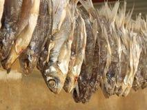 Lutfisk Royaltyfri Bild