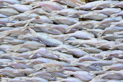 Lutfisken fisk torkade Thailand traditionell uttorkning Arkivbild