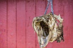Lutfiskhuvud som kedjas fast till den röda fishermansstugan royaltyfria bilder