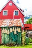 Lutfiskuttorkning i luften av byn av Aurland i Norge Royaltyfri Foto