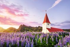 Lutheran church in Vik. The picturesque landscapes of forests and mountains. Wild blue lupine blooming in summer. Orange. Sunset in Iceland Stock Photos