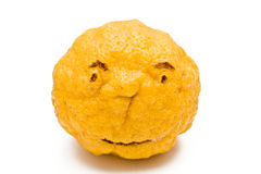 Lutin jaune de citron Photographie stock libre de droits