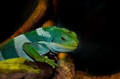 Lutin vert Photographie stock libre de droits
