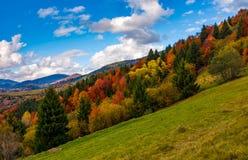 Lutning med den färgrika lövverkskogen Royaltyfri Bild