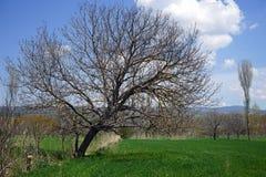 Lutningen av ett träd Royaltyfri Bild