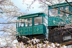 Lutningsbilen som passerar tunnelen för den körsbärsröda blomningen på den Funaoka slotten, fördärvar parkerar, Shibata, Miyagi,  Royaltyfri Foto