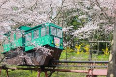 Lutningsbilen som passerar tunnelen för den körsbärsröda blomningen på den Funaoka slotten, fördärvar parkerar, Shibata, Miyagi,  Arkivfoto