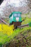 Lutningsbilen som passerar tunnelen för den körsbärsröda blomningen på den Funaoka slotten, fördärvar parkerar, Shibata, Miyagi,  Arkivfoton