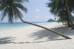 Lutningskokosnöt på stranden Arkivbilder
