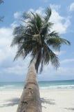 Lutningskokosnöt på stranden Royaltyfri Fotografi