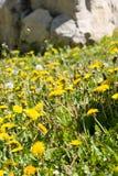 Lutte contre les mauvaises herbes Photo libre de droits