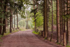 Lutterzand. Picture of the woods at the Lutterzand in the Netherlands Stock Photography