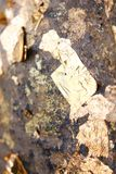 Luuk Nimit i buddistisk tempel arkivfoto