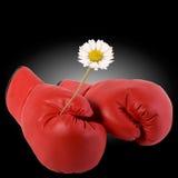 Luvas de encaixotamento e uma flor Foto de Stock Royalty Free