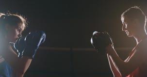 Luvas de perfuração do foco do encaixotamento do atleta da mulher da aptidão que apreciam o amigo fêmea do treinamento do lutador filme