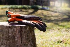 Luvas do jardim em um coto de árvore de madeira Fotografia de Stock