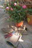 Luvas e Clippers de jardinagem na luz da tarde Imagem de Stock Royalty Free