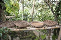 Luwak咖啡豆 库存图片