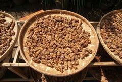 Luwak咖啡豆 免版税库存照片