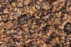 Luwak烘干在篮子的咖啡豆在coffe种植园在Ubud,巴厘岛 地道有机luwak咖啡豆 免版税库存图片