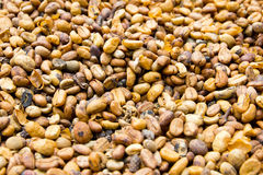 Luwak coffee beans Stock Images